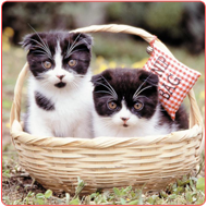 Two Kittens Sitting Inside the Basket